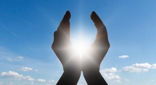 Организмы, использующие энергию солнечного света